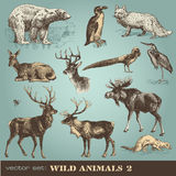 Wild animals 2 royalty free illustration