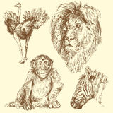 Wild animals Stock Photos