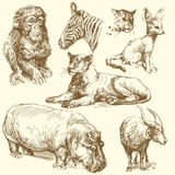 Wild animals. Hand drawn collection Royalty Free Stock Image