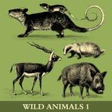 Wild Animals Royalty Free Stock Photos