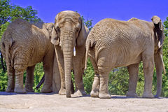 Wild animals Royalty Free Stock Images