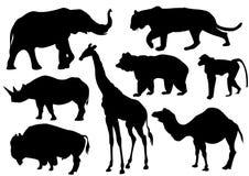 Wild animals. Black silhouettes of wild animals Royalty Free Stock Photos