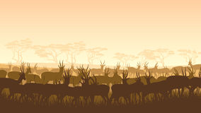 Wild animals in African savanna. Royalty Free Stock Images