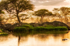 Sunset over the river in Serengeti, Tanzania. Wild animals at the bank of the river in Serengeti National Park, Tanzania royalty free stock photo