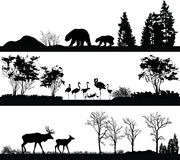 Wild animals (bear, Flamingo, deer) in different habitats Stock Images