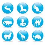 Wild animals button set Royalty Free Stock Image