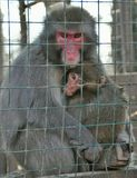 Wild animals in a cage Royalty Free Stock Photo