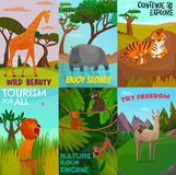 Wild Animals Cards Set. Set of cartoon colored cards with wild exotic animals  lives in jungle and tropics vector illustration Stock Image