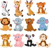 Wild Animals Cartoon Collection Set Stock Photography