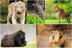 Wild Animals Collage. Collection of five wild animals photographed in a South Florida zoo Stock Photography