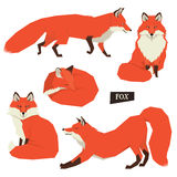 Wild animals collection Five Red Foxes Isolated objects Stock Photography