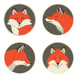 Wild animals collection Red foxes Geometric style Four round fra Royalty Free Stock Image