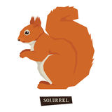 Wild animals collection Squirrel Geometric style Royalty Free Stock Photography