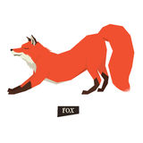 Wild animals collection Stretching Red Fox Isolated object Royalty Free Stock Photo