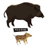 Wild animals collection Wild boar Geometric style Royalty Free Stock Image