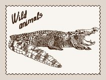 Wild animals. crocodile Royalty Free Stock Photo