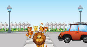 Wild animals crossing and  a car in the road Stock Photos