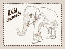 Wild animals. elephant Stock Image