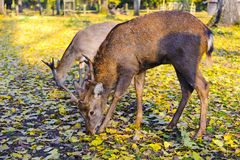 Wild animals in the fall Stock Photography