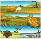 Wild animals in the field. Illustration Royalty Free Stock Images