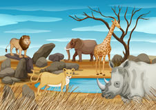 Wild animals in the field. Illustration Royalty Free Stock Photo