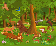 Wild animals fighting in the forest Stock Images