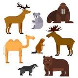 Wild animals flat cartoon isolated icons Stock Image