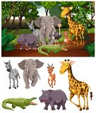 Wild animals in the forest royalty free stock images