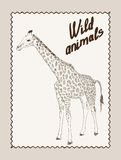 Wild animals. giraffe Royalty Free Stock Image