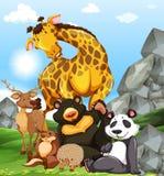 Wild animals on ground Stock Photo