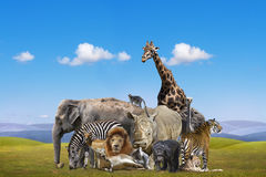 Wild animals group. On the blue sky background royalty free stock photo