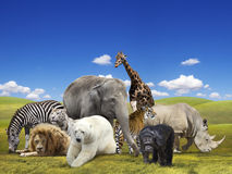Wild  animals group. Wild animals group on the green landscape background Stock Images