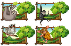 Wild animals haning on the branch Stock Images