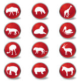 Wild animals icons Stock Images