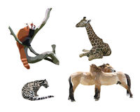 Wild animals II Stock Image