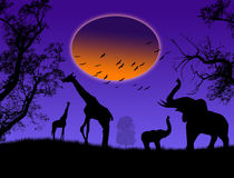 Wild animals on jungle Royalty Free Stock Images