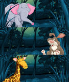 Wild animals in the jungle at night. Illustration Stock Images