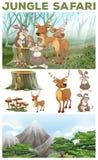 Wild animals in the jungle safari Stock Images