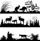 Wild animals Kangaroos, sheep, wild cats Royalty Free Stock Photography