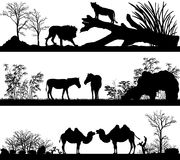 Wild animals (lion, horse, pony, zebra, camel)  Royalty Free Stock Photo
