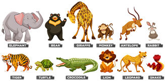 Wild animals in many types Stock Photo