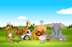 Wild animals in nature Royalty Free Stock Photo