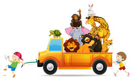 Wild animals on the pick up truck Stock Image