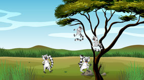 Wild animals playing in the tree Stock Image