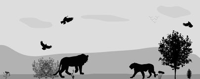 Wild Animals on the Prowl. Vector Illustration. Royalty Free Stock Images