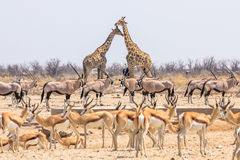 Wild animals pyramid Stock Photo