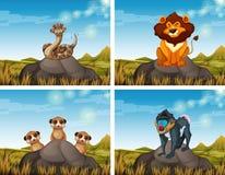 Wild animals in the savanna field. Illustration royalty free illustration