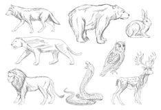 Wild animals set stock illustration