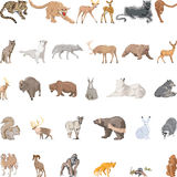 Wild Animals Set royalty free stock photos