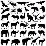 Wild animals set Royalty Free Stock Photo